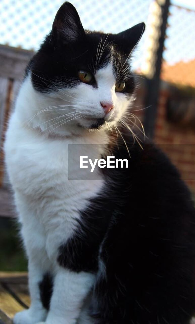 one animal, animal themes, domestic cat, pets, domestic animals, mammal, feline, cat, whisker, no people, close-up, indoors, day
