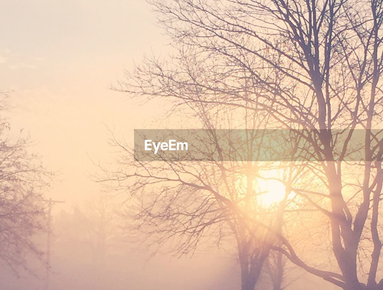 bare tree, branch, tree, nature, beauty in nature, no people, low angle view, tranquility, fog, outdoors, winter, day, scenics, sky