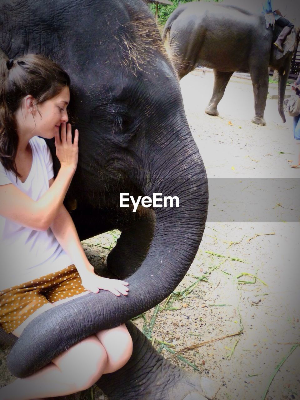 elephant, mammal, real people, one animal, lifestyles, one person, day, domestic animals, outdoors, women, people