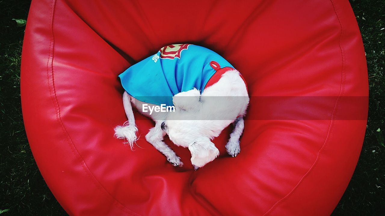 High Angle View Of Dog Lying On Red Bean Bag In Back Yard