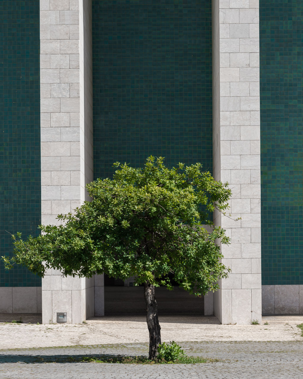 TREE BY BUILDING