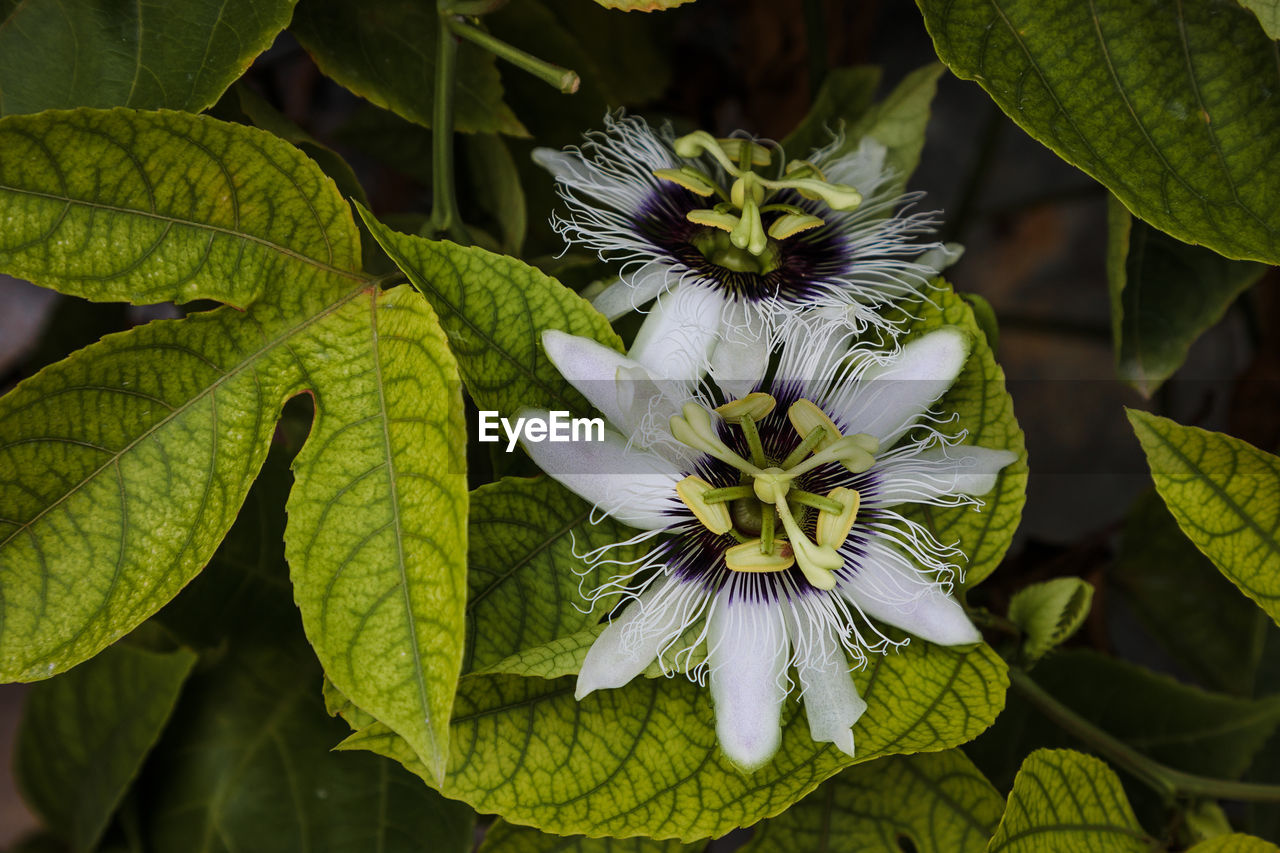 CLOSE-UP OF GREEN PLANT ON WHITE FLOWERING PLANTS