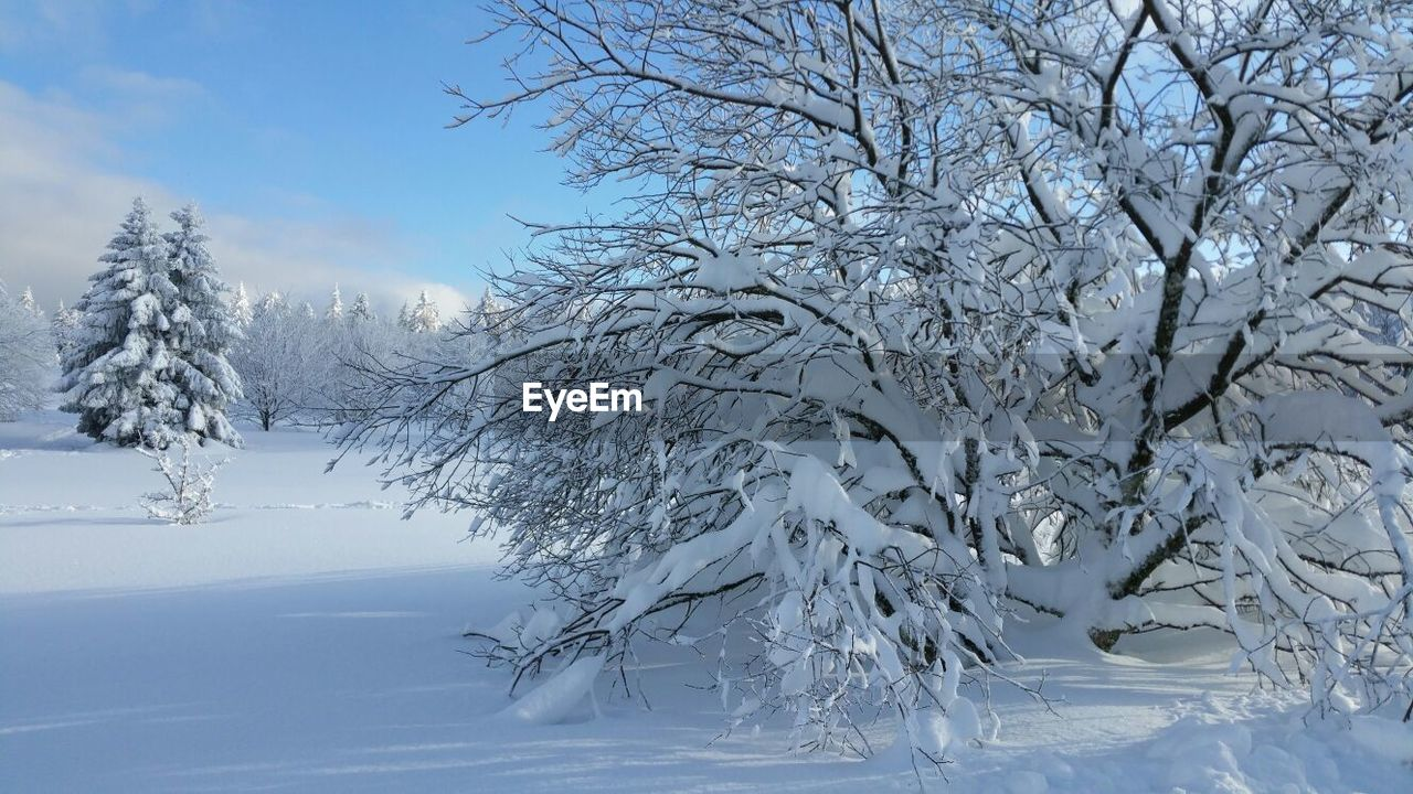 cold temperature, winter, tree, snow, plant, beauty in nature, tranquility, tranquil scene, scenics - nature, no people, frozen, nature, covering, white color, sky, bare tree, day, branch, deep snow, outdoors