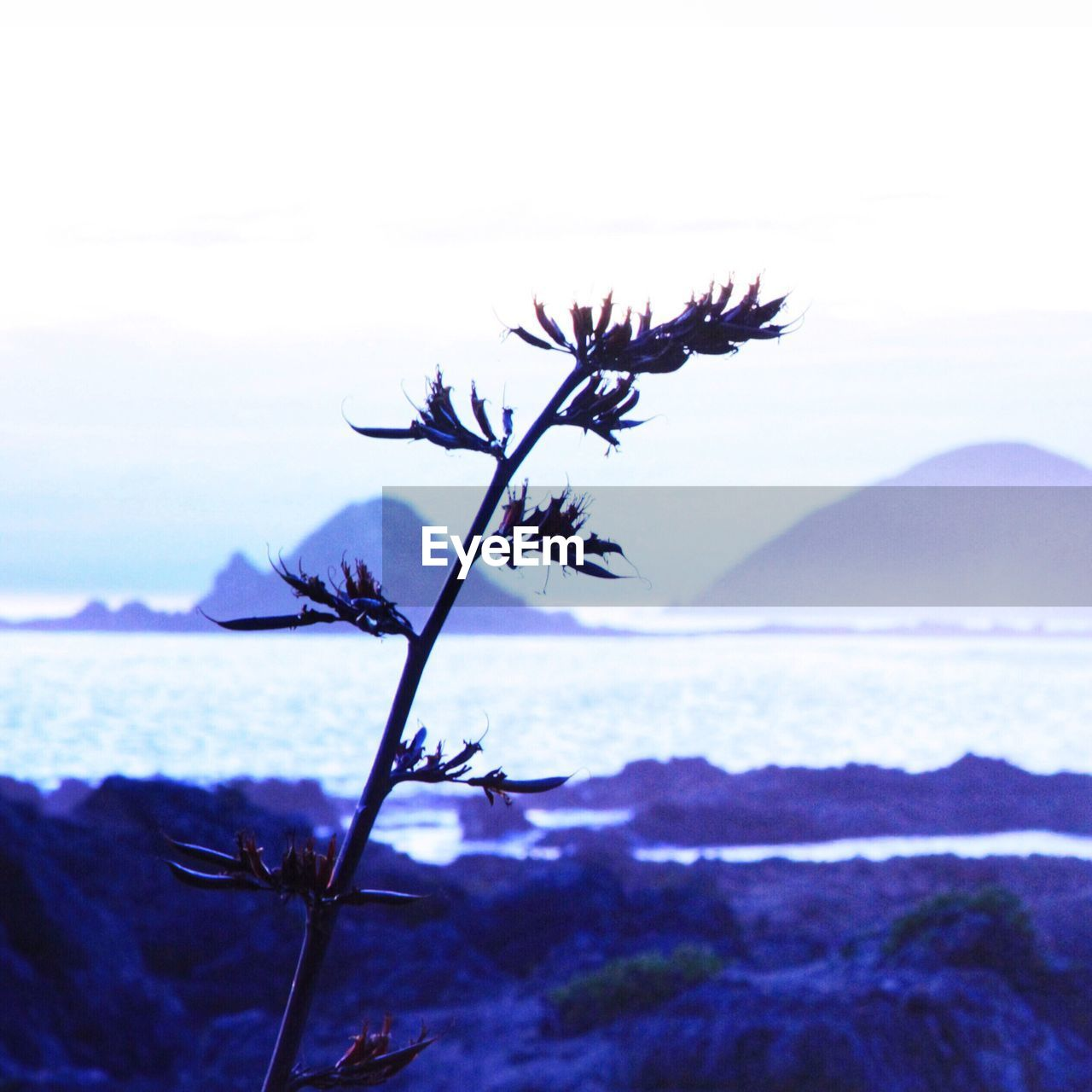 nature, beauty in nature, tranquil scene, scenics, tranquility, outdoors, sky, no people, water, day, sea, focus on foreground, mountain, fragility, landscape, growth, horizon over water, close-up, flower, freshness