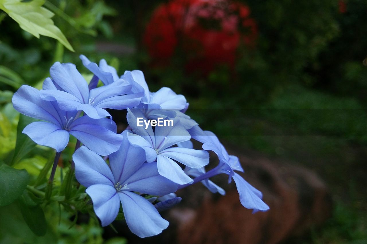 flower, petal, beauty in nature, nature, fragility, growth, plant, flower head, purple, freshness, no people, blooming, close-up, focus on foreground, outdoors, blue, day