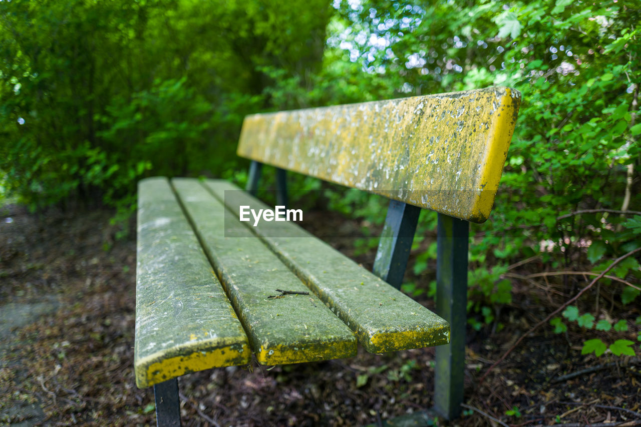 plant, nature, tree, focus on foreground, no people, day, seat, outdoors, wet, forest, wood - material, close-up, bench, water, absence, park, selective focus, growth, green color, metal, park bench