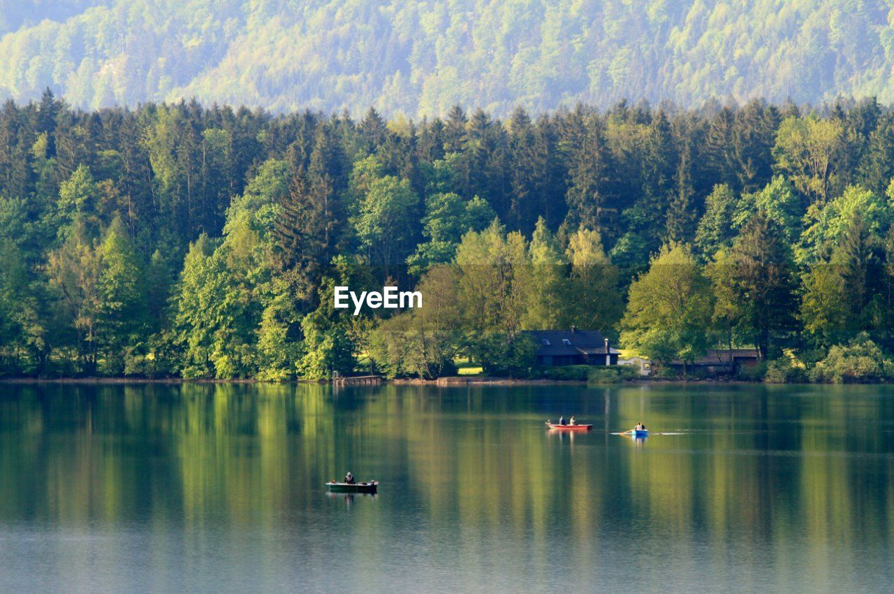 tree, nature, beauty in nature, scenics, water, reflection, lake, tranquil scene, tranquility, day, waterfront, forest, outdoors, mountain, no people, growth, animal themes, sky