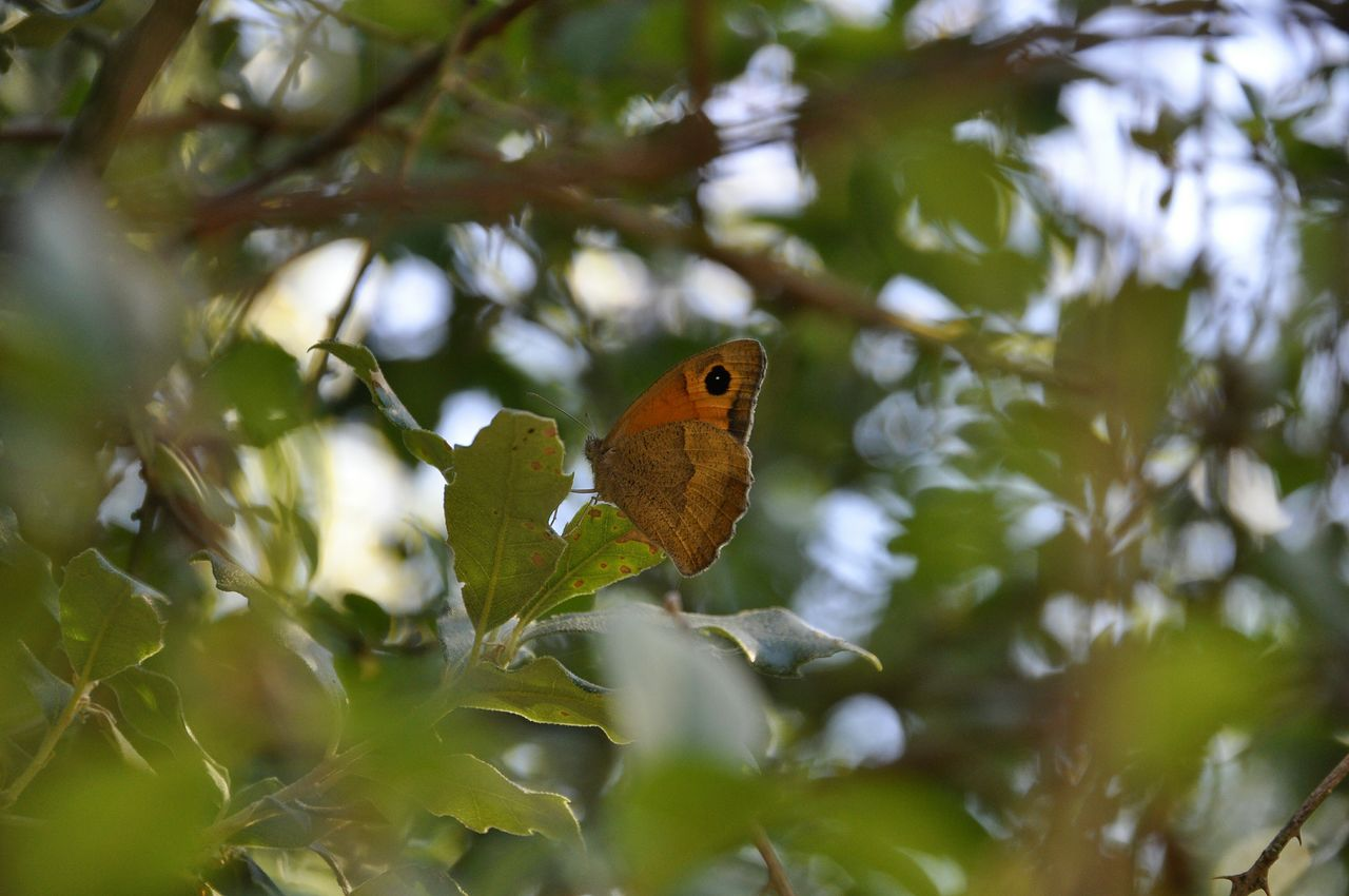 Low angle view of butterfly on tree