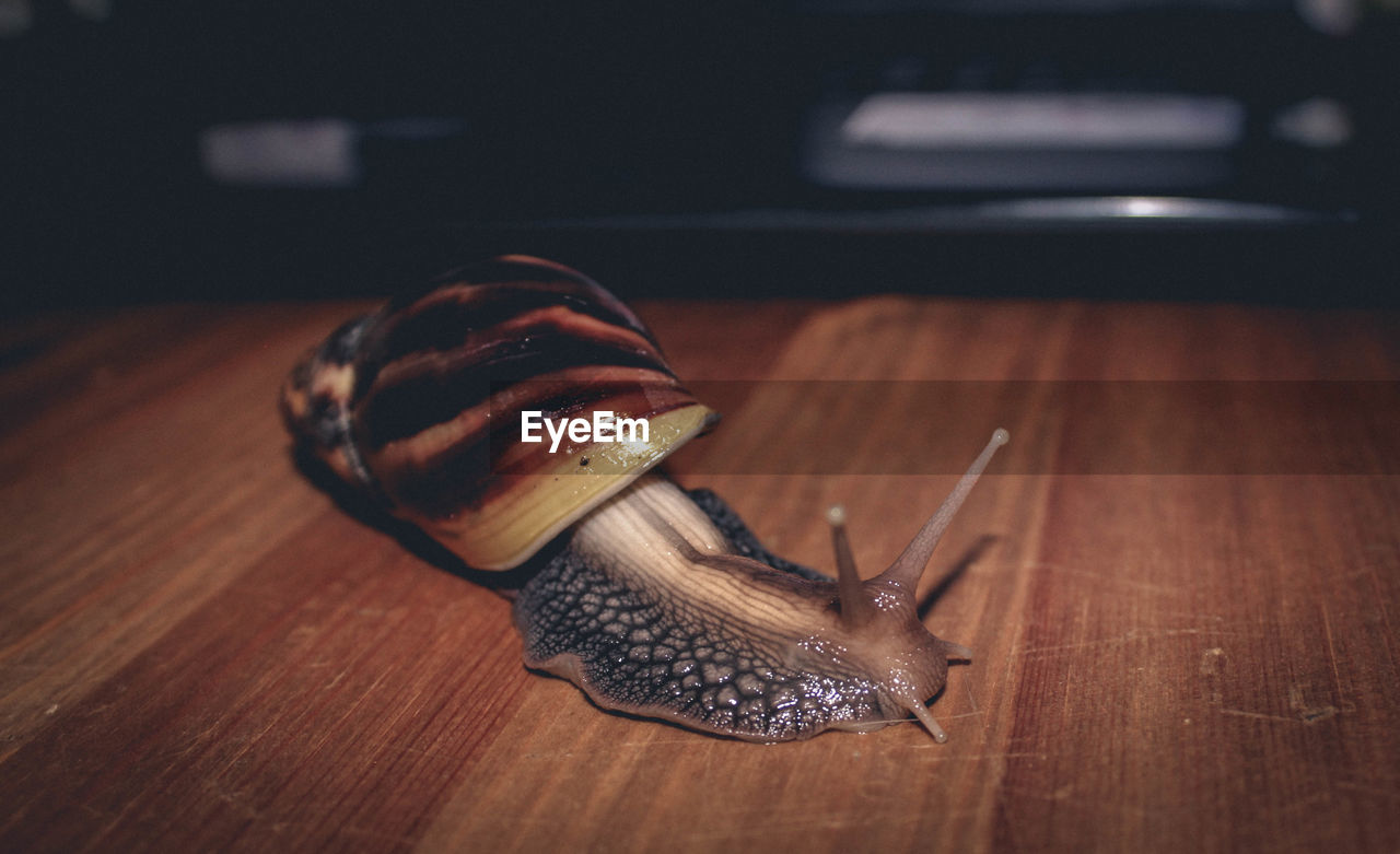 Close-up of snail on wooden floor