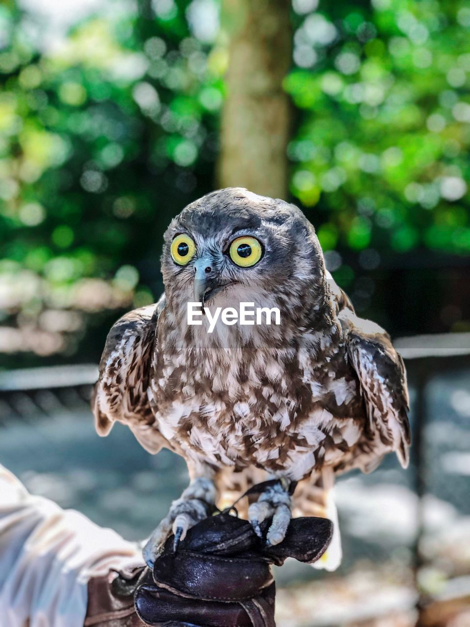 bird, vertebrate, one animal, bird of prey, animals in the wild, animal wildlife, focus on foreground, owl, day, close-up, looking at camera, portrait, perching, people, outdoors, nature, eagle, yellow eyes