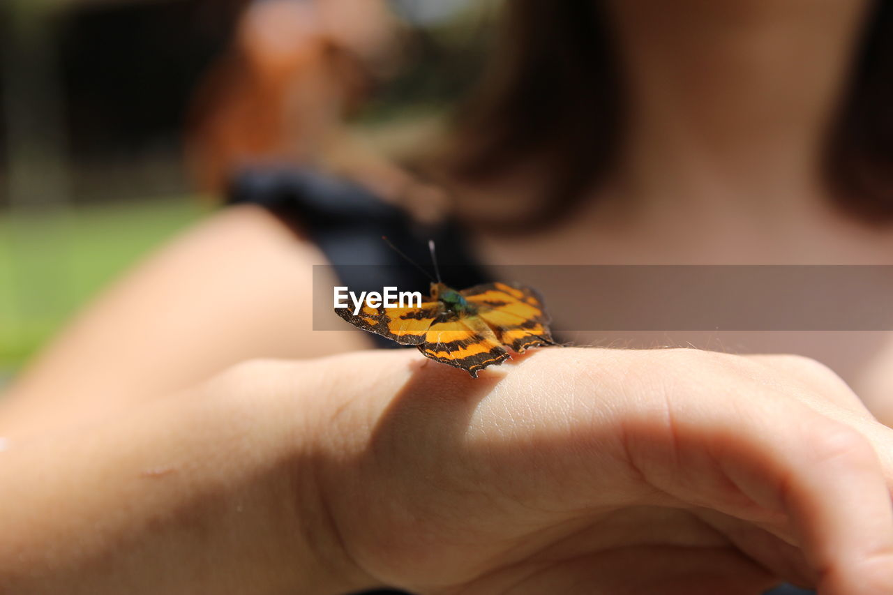 human hand, human body part, hand, invertebrate, animal wildlife, insect, one animal, animal, animal themes, animals in the wild, one person, real people, body part, close-up, unrecognizable person, selective focus, finger, lifestyles, day, human finger, animal wing, butterfly - insect, outdoors, human limb