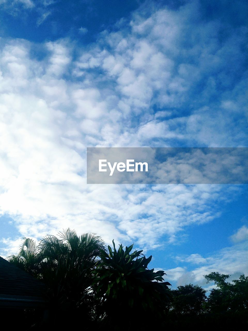 sky, cloud - sky, tree, plant, beauty in nature, low angle view, nature, no people, tranquility, scenics - nature, day, tranquil scene, silhouette, growth, outdoors, blue, non-urban scene, palm tree, tropical climate