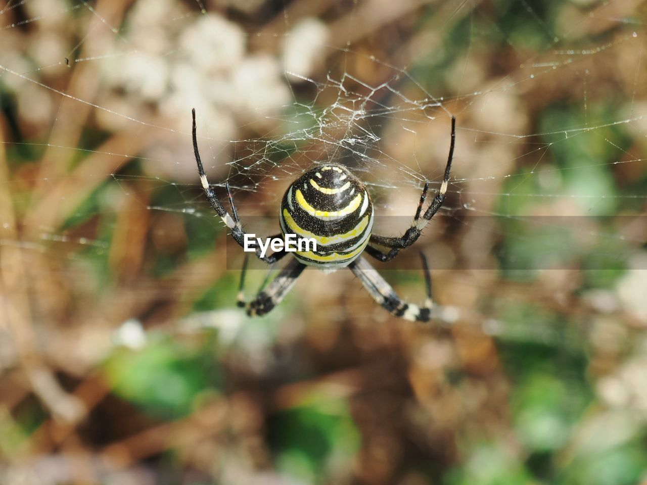 animals in the wild, invertebrate, animal themes, animal, animal wildlife, insect, one animal, spider, arachnid, close-up, spider web, focus on foreground, arthropod, nature, day, fragility, no people, outdoors, beauty in nature, selective focus, web, animal leg