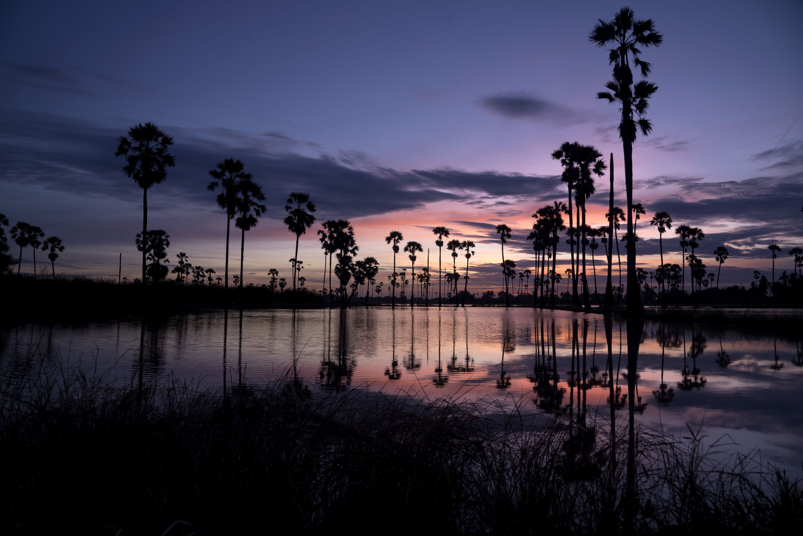 SILHOUETTE PALM TREES BY LAKE AT SUNSET