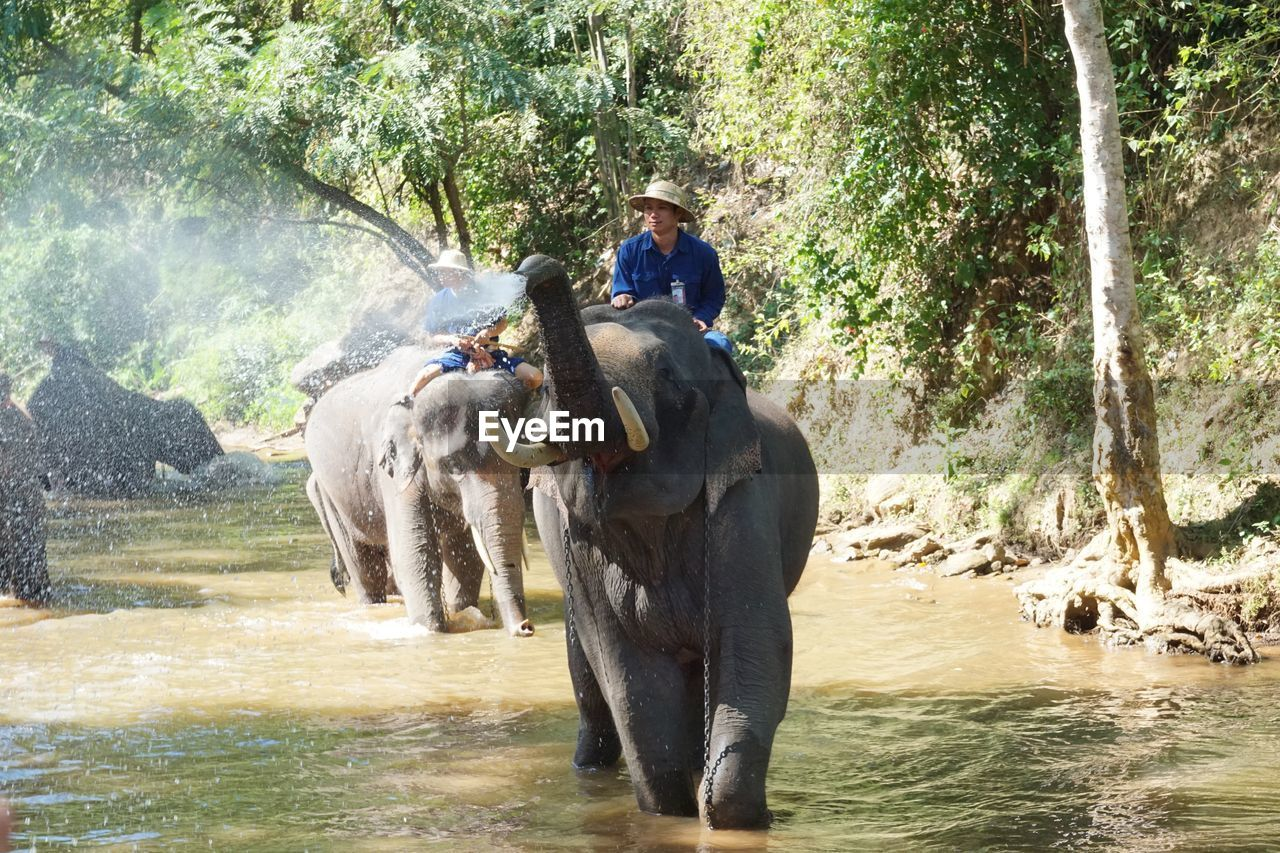 elephant, indian elephant, mammal, one animal, animal themes, water, outdoors, day, domestic animals, river, animal trunk, nature, washing, livestock, one person, forest, happiness, ankle deep in water, full length, sitting, tree, adult, vacations, beauty in nature, one man only, adults only, people