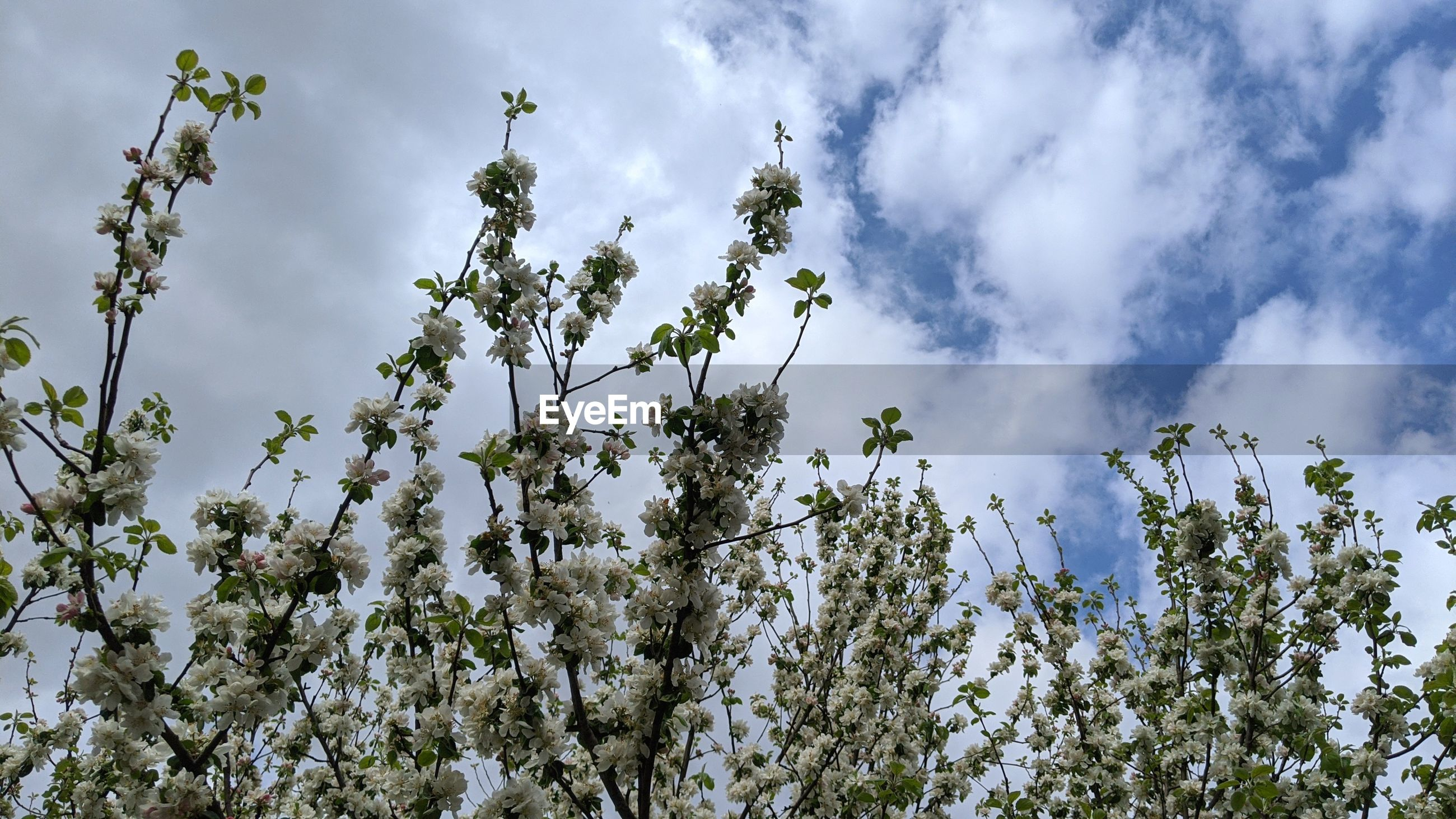 nature, plant, sky, cloud, tree, sunlight, flower, beauty in nature, low angle view, growth, blossom, grass, meadow, no people, branch, outdoors, day, flowering plant, leaf, environment, freshness, springtime, spring, green, tranquility, land, scenics - nature, landscape, wildflower