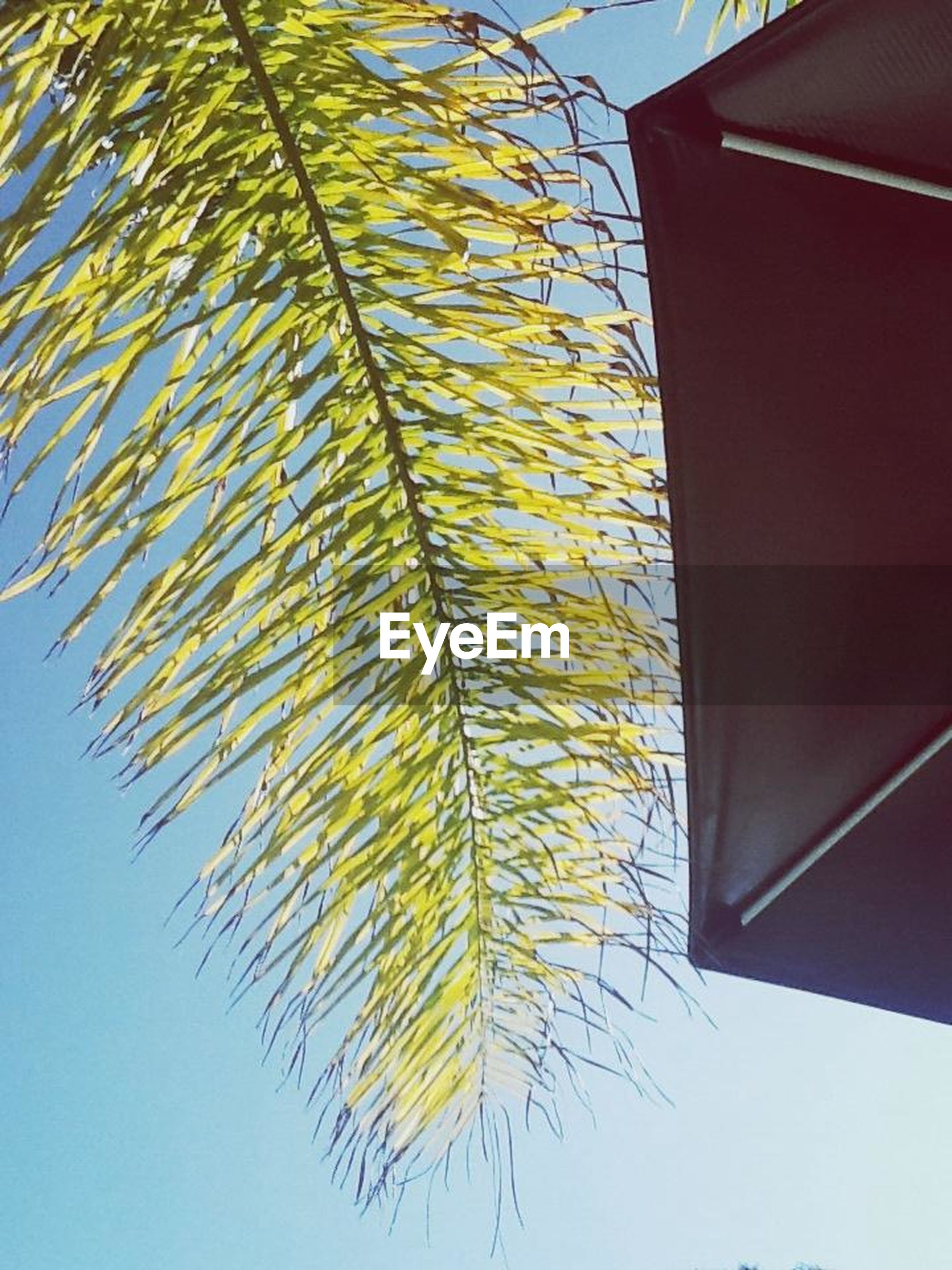 low angle view, architecture, built structure, building exterior, clear sky, yellow, no people, day, pattern, sunlight, directly below, sky, decoration, hanging, multi colored, building, outdoors, blue, leaf, house
