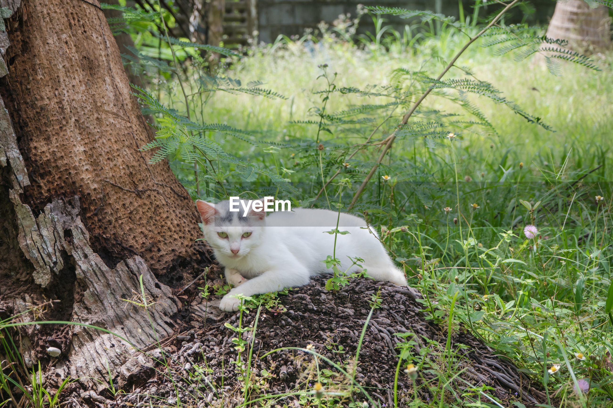 VIEW OF A CAT LYING ON GRASS