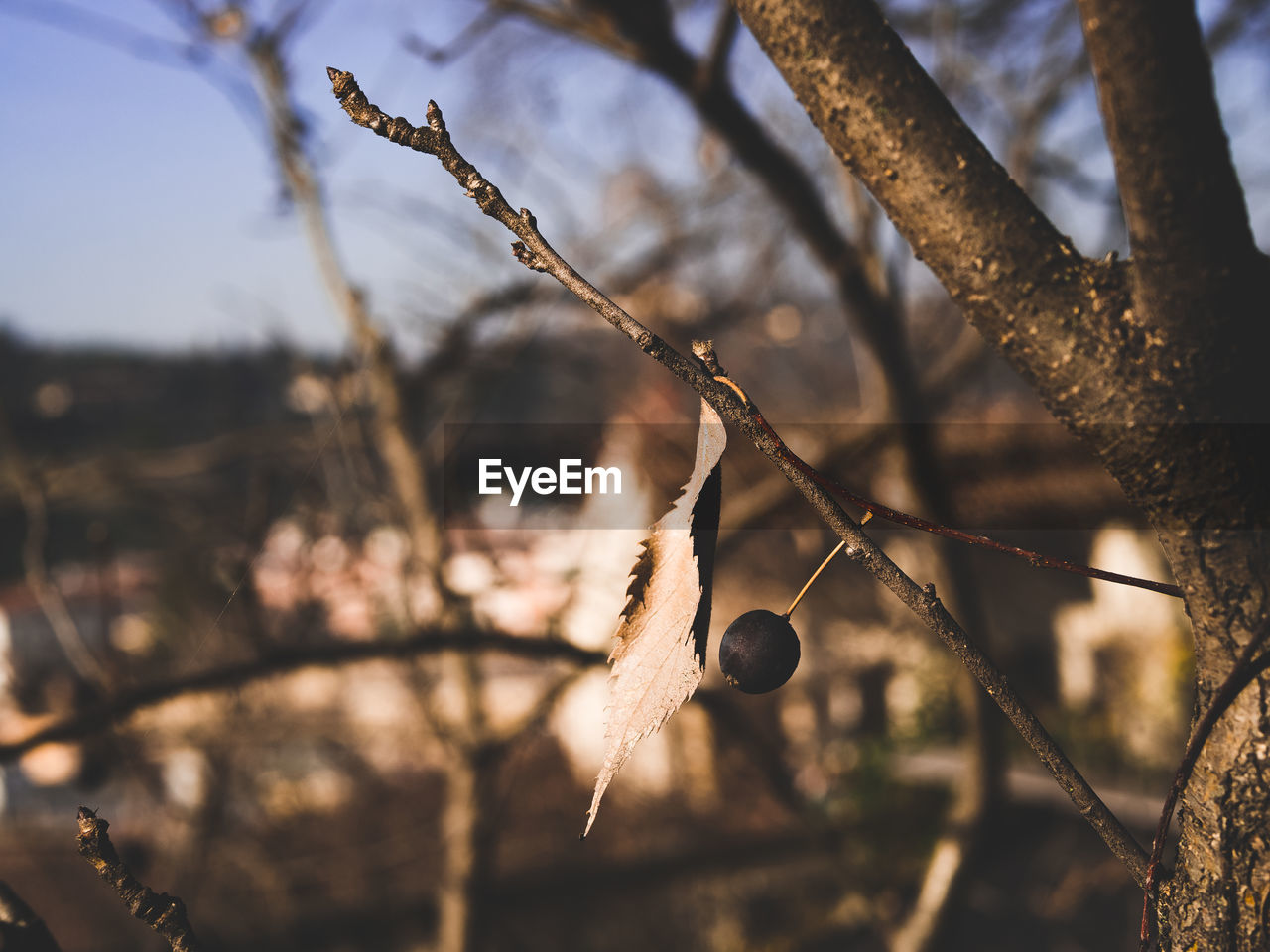 plant, tree, focus on foreground, nature, growth, no people, branch, close-up, day, cold temperature, beauty in nature, food, fruit, winter, food and drink, outdoors, tranquility, sunlight, healthy eating, snow