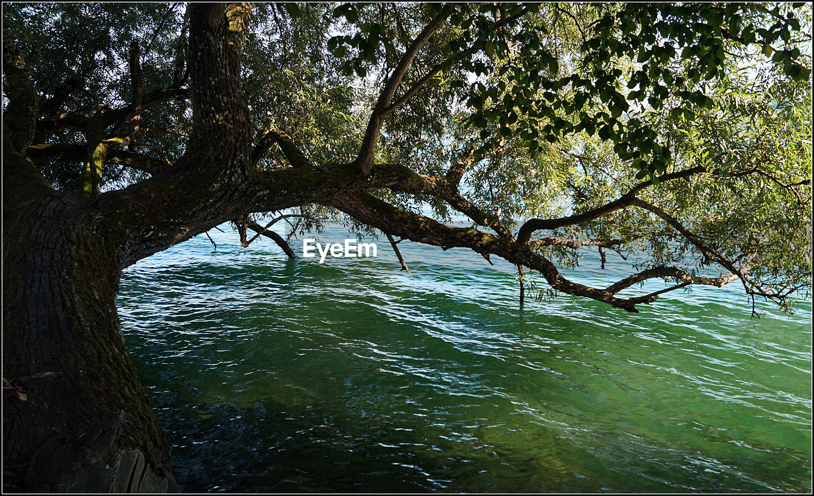water, tree, branch, growth, tranquility, nature, tranquil scene, tree trunk, scenics, beauty in nature, green color, day, green, outdoors, growing, sea, non-urban scene, vacations, remote, no people, solitude, tourism, waterfront