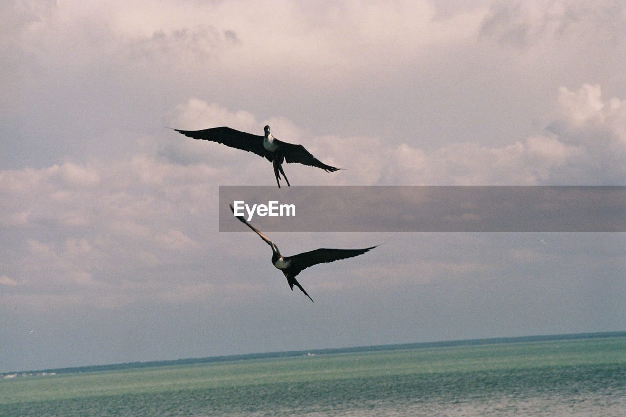 flying, nature, sea, sky, bird, spread wings, beauty in nature, mid-air, water, cloud - sky, animals in the wild, animal themes, horizon over water, tranquil scene, scenics, tranquility, outdoors, no people, day, seagull, motion
