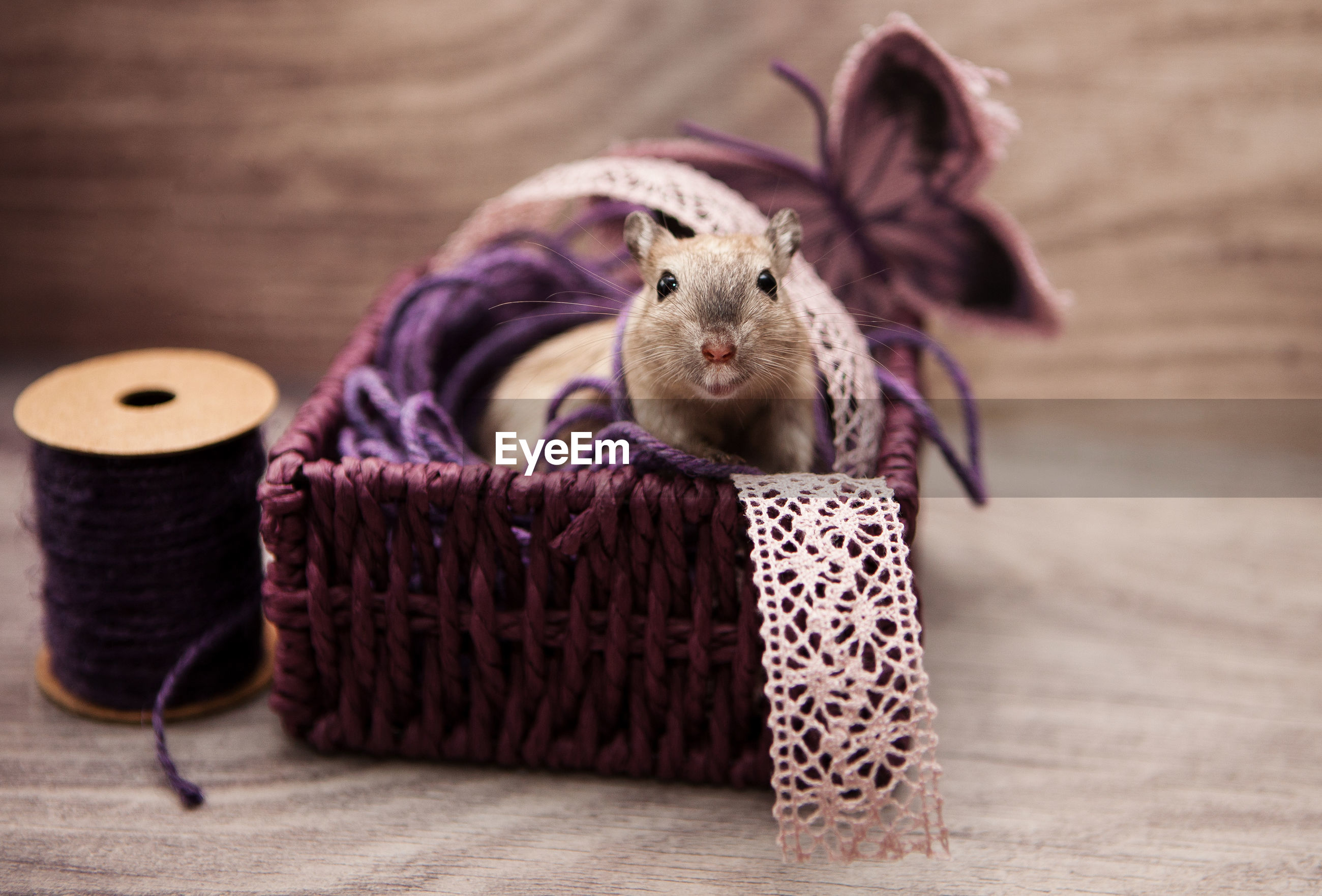 Close-up of rat in sewing basket