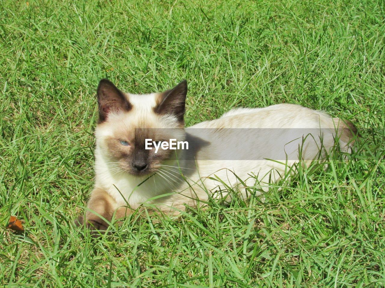 grass, domestic, pets, mammal, domestic animals, one animal, cat, plant, feline, vertebrate, domestic cat, green color, field, land, no people, nature, portrait, whisker