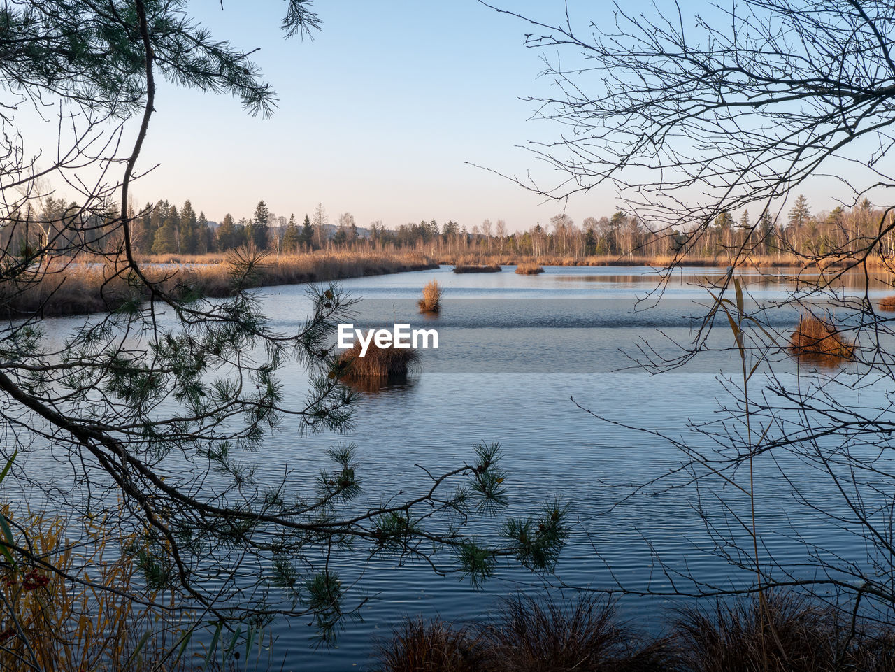 water, tree, sky, plant, lake, tranquility, bare tree, scenics - nature, tranquil scene, nature, beauty in nature, no people, non-urban scene, branch, clear sky, day, winter, outdoors