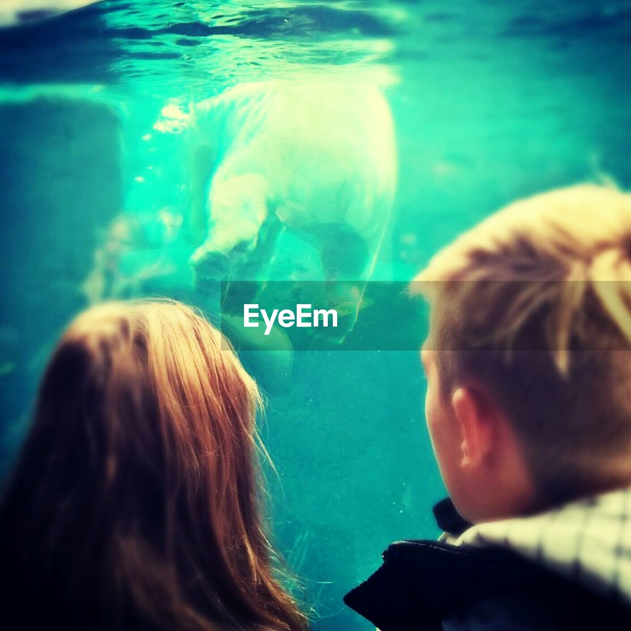 rear view, real people, water, aquarium, sea life, animal themes, fish, indoors, swimming, childhood, underwater, nature, close-up, one person, day, people