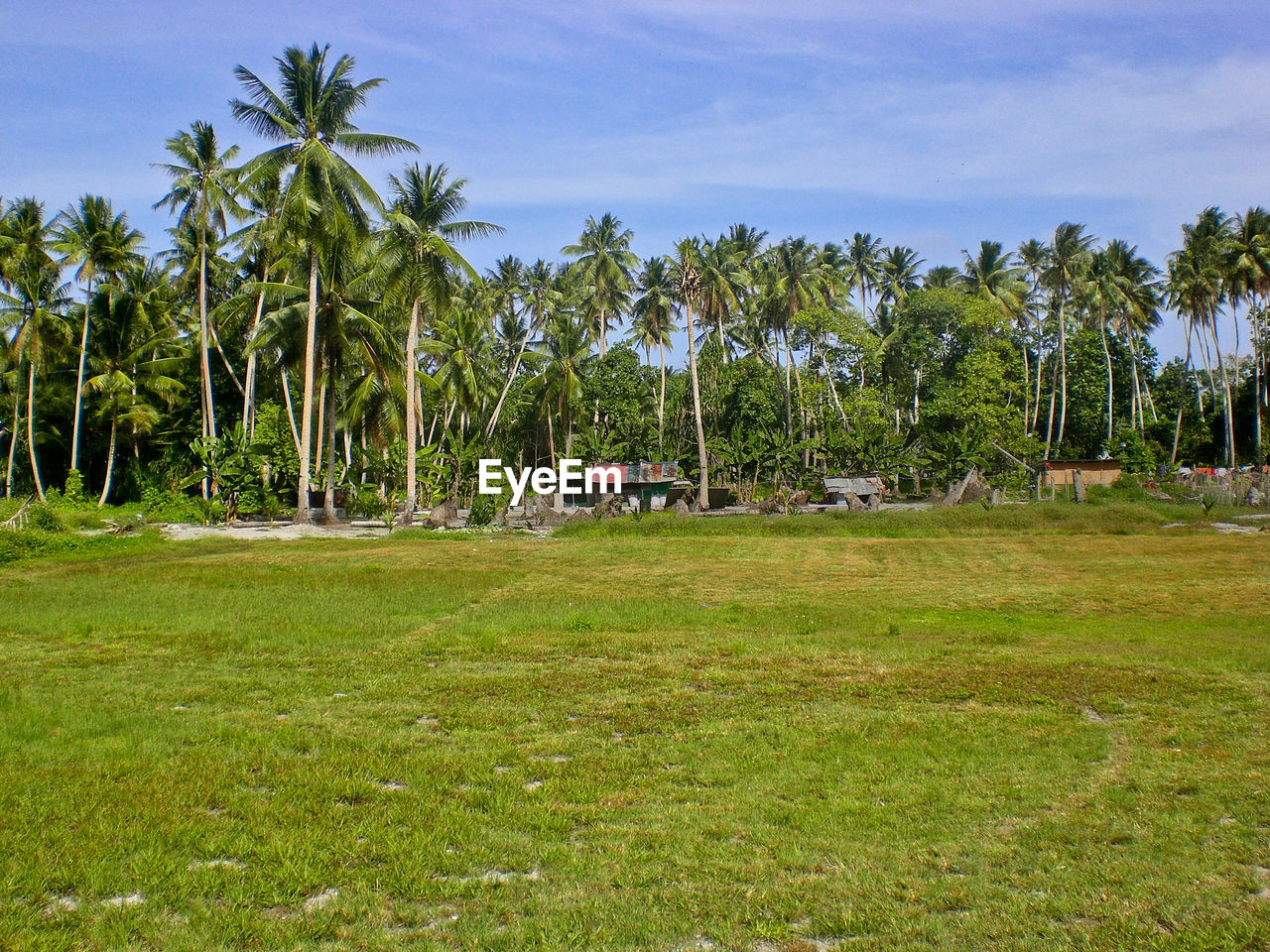 plant, tree, sky, palm tree, tropical climate, grass, land, nature, cloud - sky, green color, field, day, beauty in nature, landscape, architecture, no people, environment, growth, tranquil scene, scenics - nature, outdoors, coconut palm tree