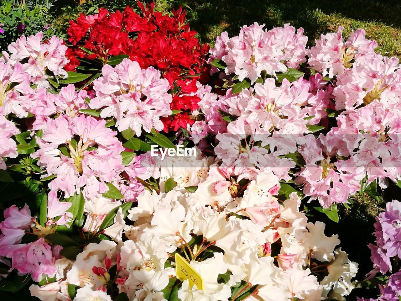 flowering plant, flower, vulnerability, fragility, plant, freshness, beauty in nature, petal, pink color, growth, close-up, flower head, inflorescence, nature, no people, day, springtime, abundance, outdoors, botany, bunch of flowers, bouquet, flower arrangement, flowerbed, spring