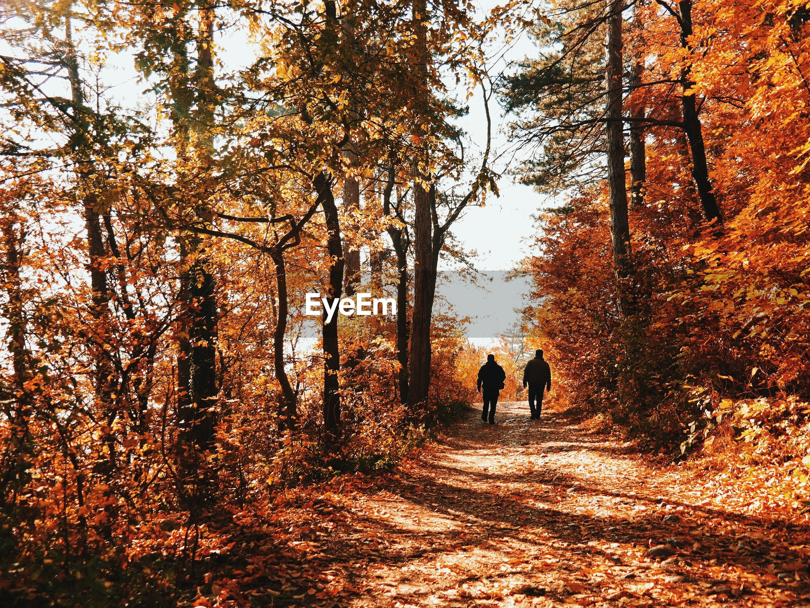 Two people walking on country road along trees
