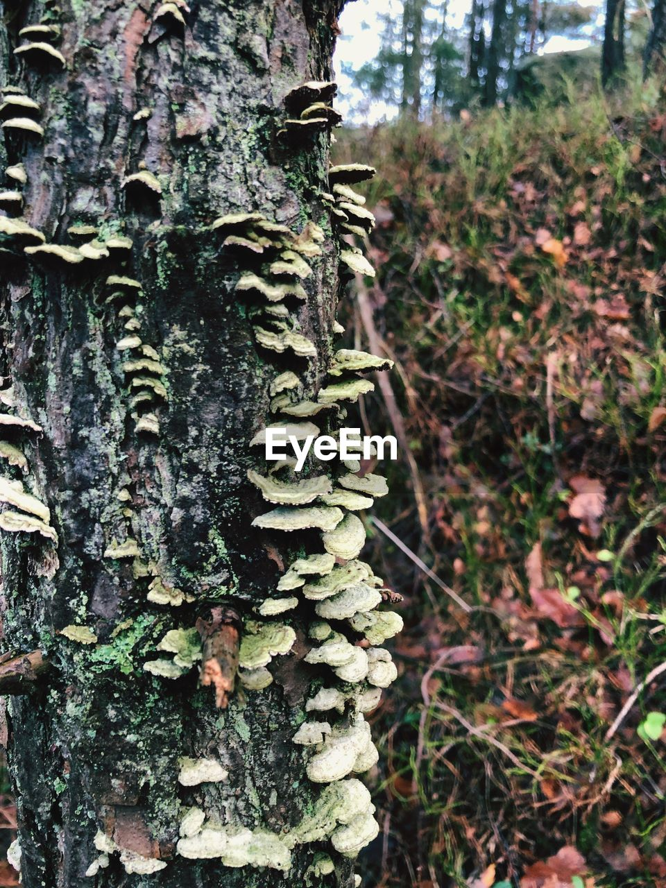 plant, tree, trunk, growth, tree trunk, day, nature, focus on foreground, no people, land, close-up, outdoors, tranquility, beauty in nature, forest, moss, green color, textured, rough, natural pattern, lichen, bark, carving
