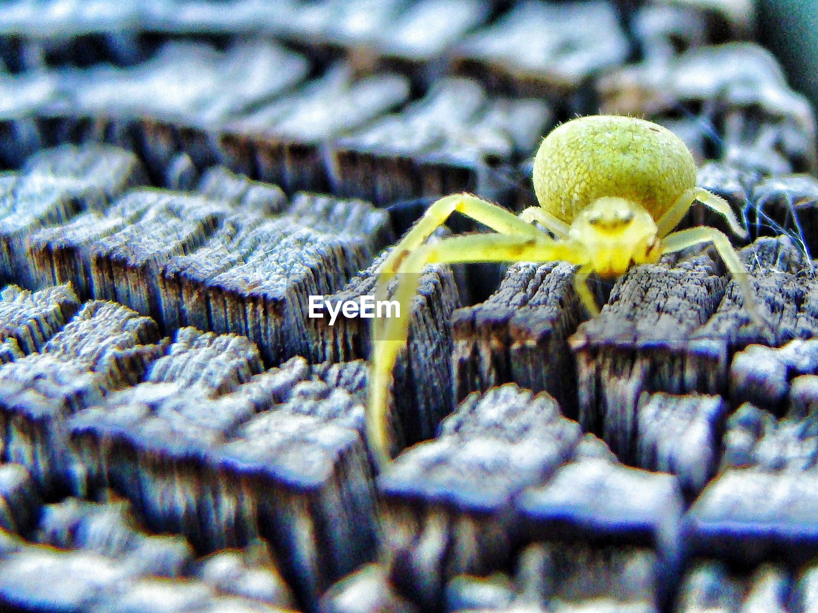 Close-up of yellow spider on wood