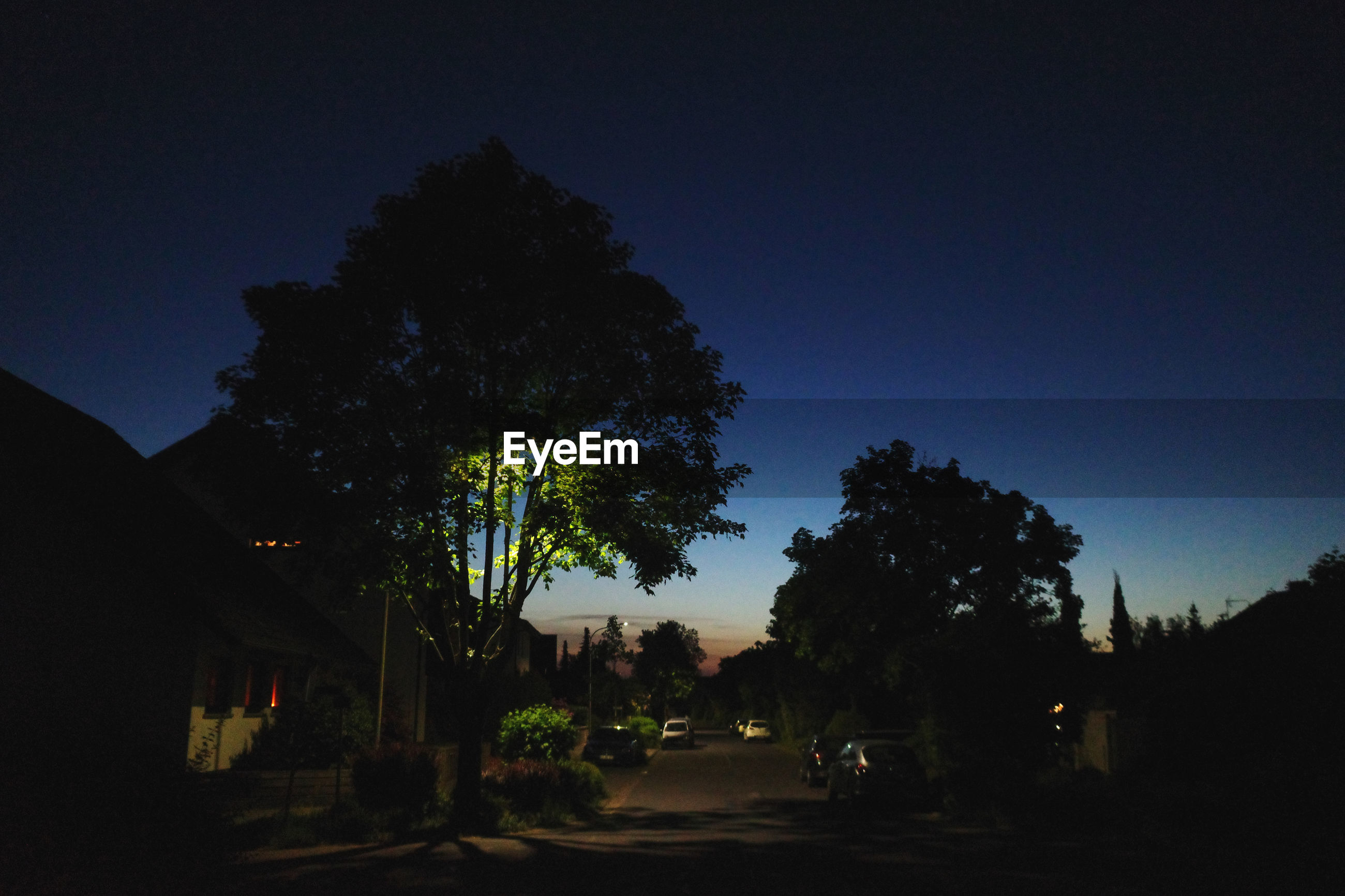 SILHOUETTE TREES AND BUILDINGS AGAINST SKY AT NIGHT