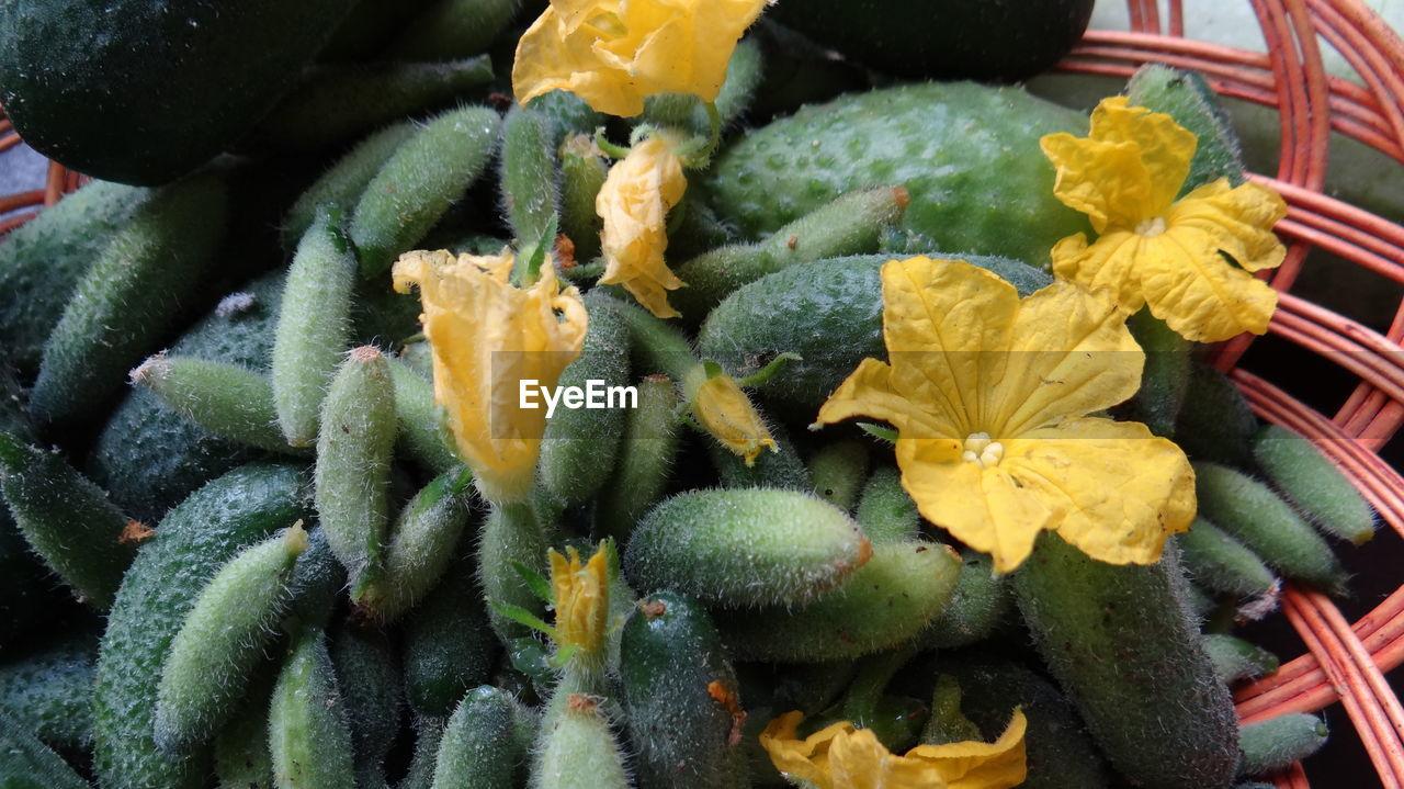 Full Frame Shot Of Yellow Flower
