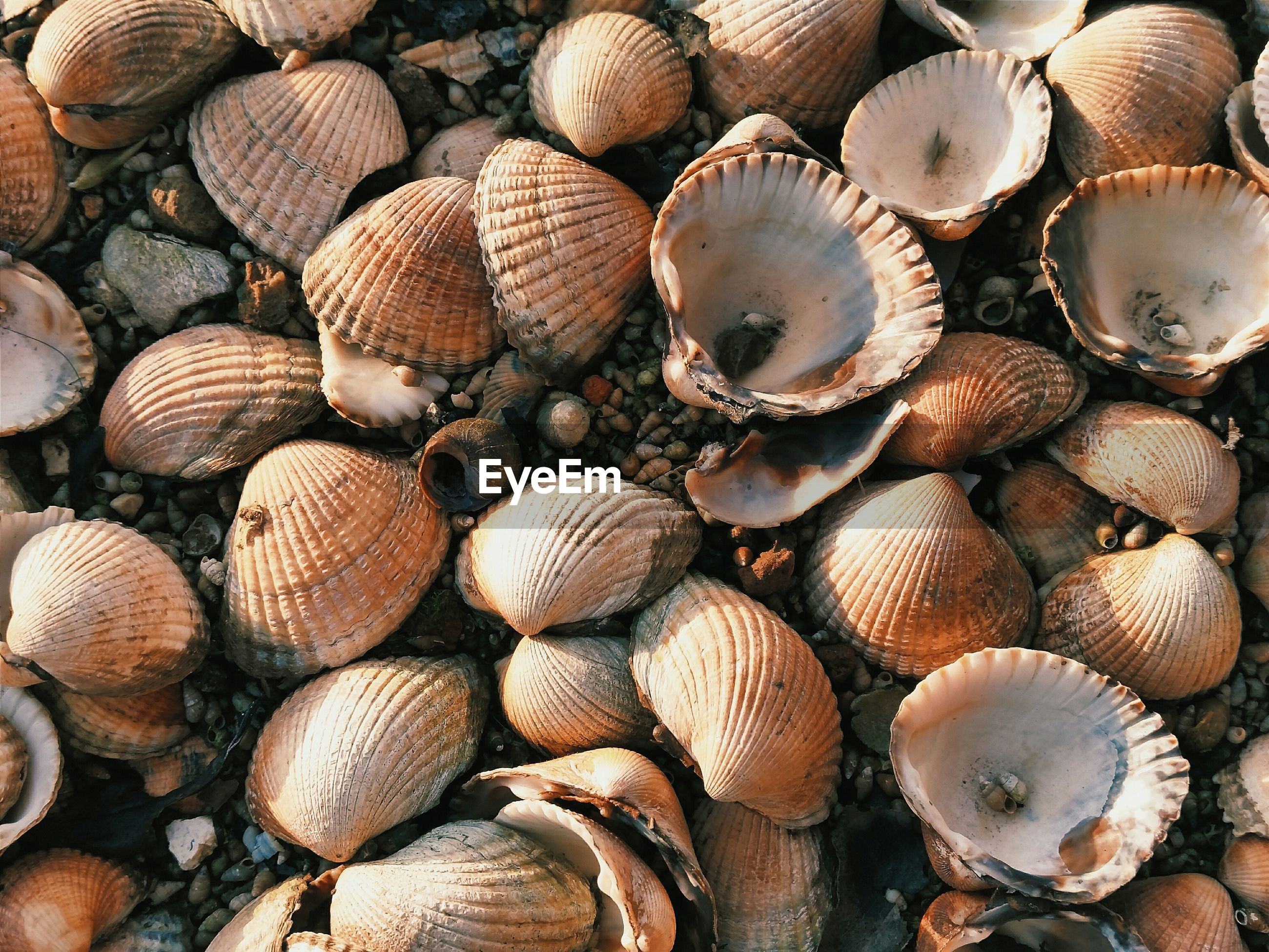 Full frame shot of seashells on sand at beach