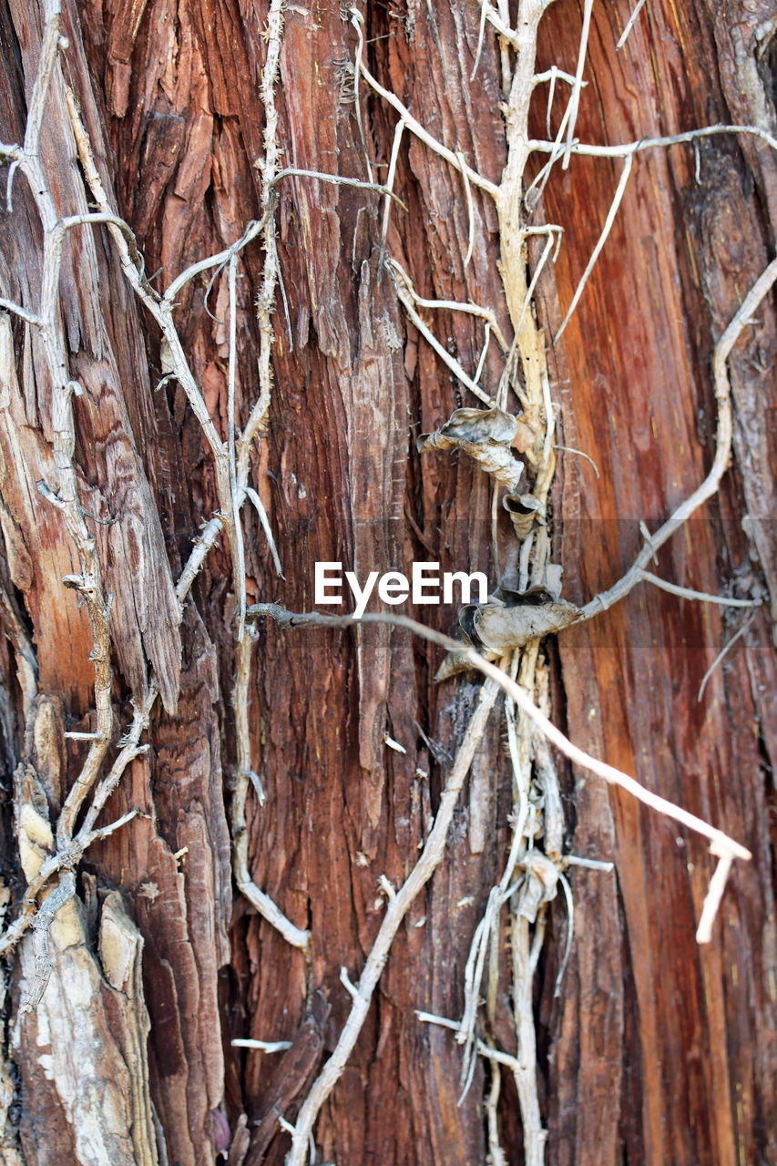 tree, no people, bare tree, nature, day, dead plant, wood - material, outdoors, tree trunk, branch, close-up, full frame, beauty in nature, animal themes