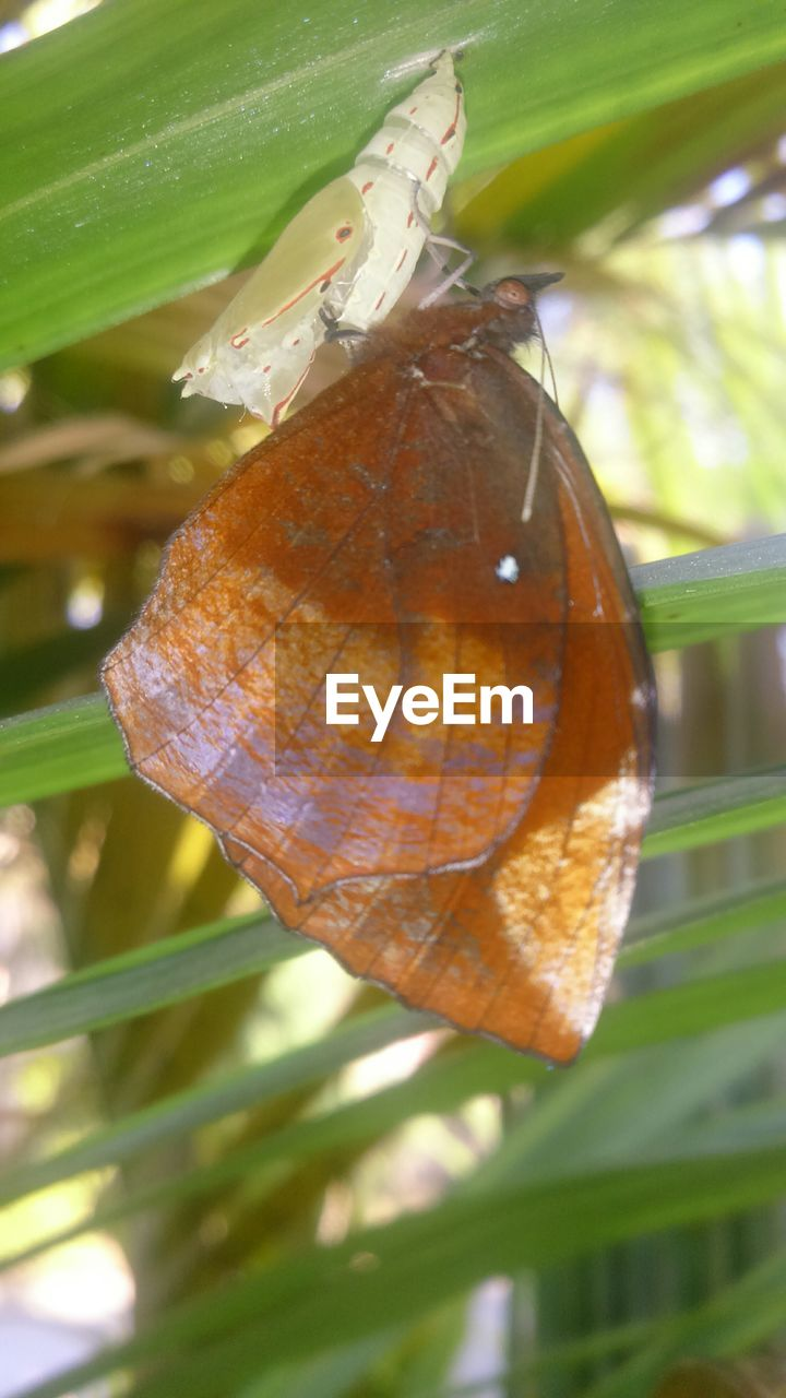 Close-up of newborn butterfly on cocoon