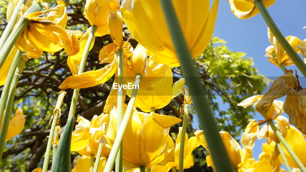 yellow, flower, plant, flowering plant, beauty in nature, growth, vulnerability, fragility, petal, freshness, close-up, flower head, no people, nature, inflorescence, day, plant stem, selective focus, sunlight, outdoors