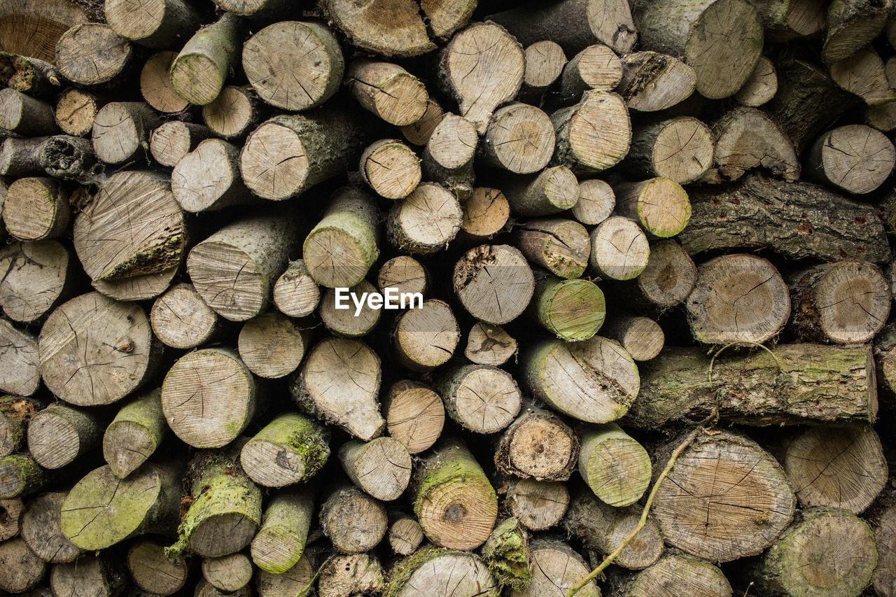 Full frame shot of logs in forest