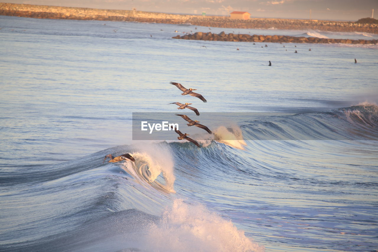Scenic View Of Birds Flying Over Sea