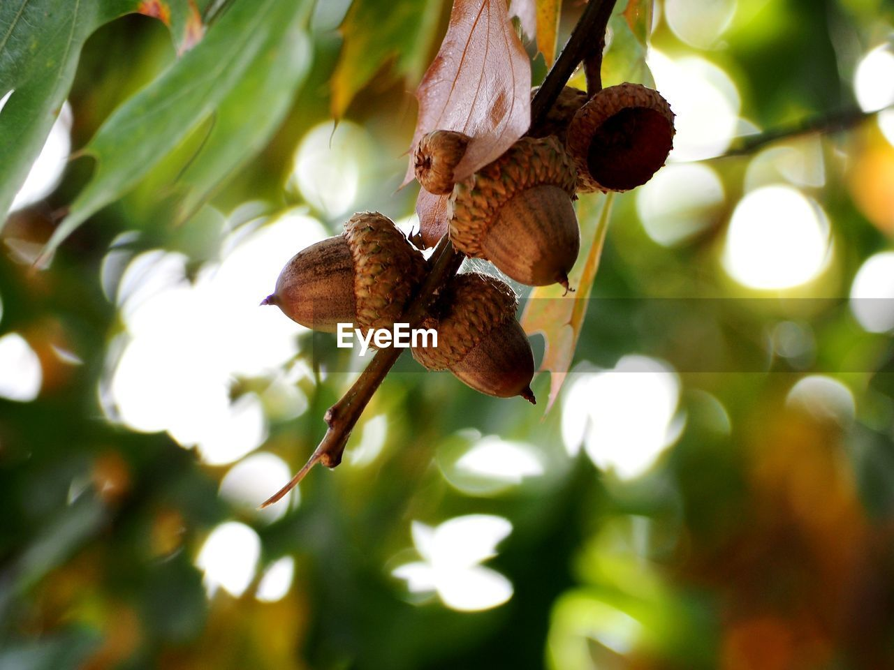plant, tree, focus on foreground, nature, no people, close-up, day, beauty in nature, leaf, growth, plant part, hanging, outdoors, sunlight, animal wildlife, animal, selective focus, animals in the wild, low angle view, branch, butterfly - insect