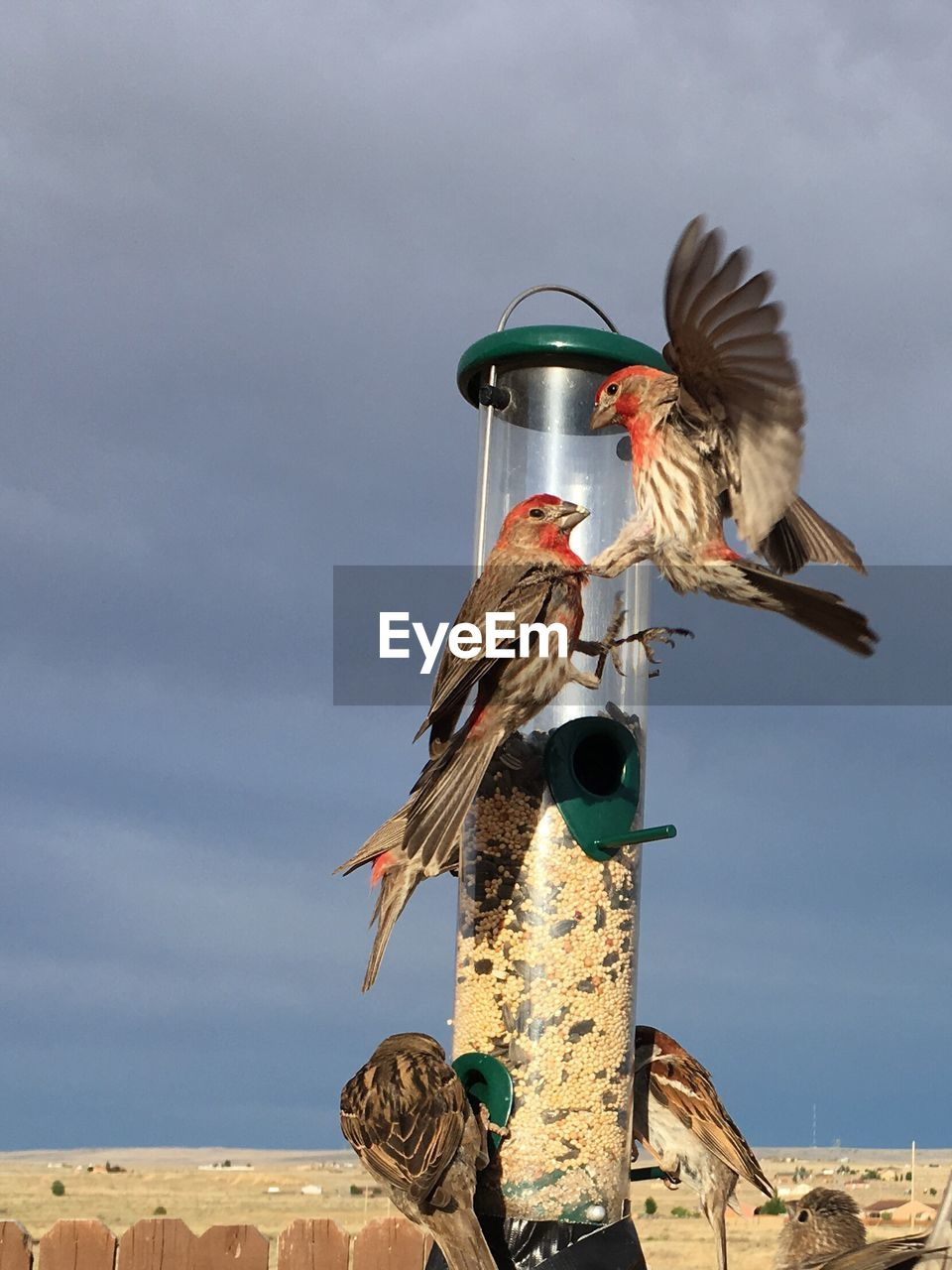 bird, vertebrate, animal, sky, animal themes, one animal, flying, animals in the wild, animal wildlife, spread wings, nature, day, no people, cloud - sky, low angle view, outdoors, bird feeder, motion, seagull
