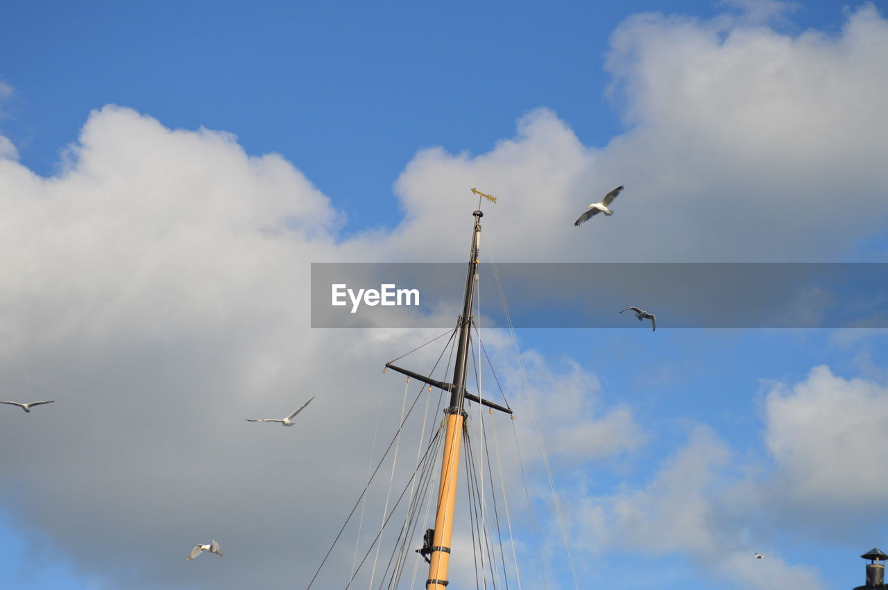 cloud - sky, sky, flying, vertebrate, low angle view, bird, animal, animals in the wild, animal wildlife, animal themes, transportation, no people, nature, mode of transportation, airplane, air vehicle, day, mid-air, group of animals, sailboat, outdoors, flock of birds