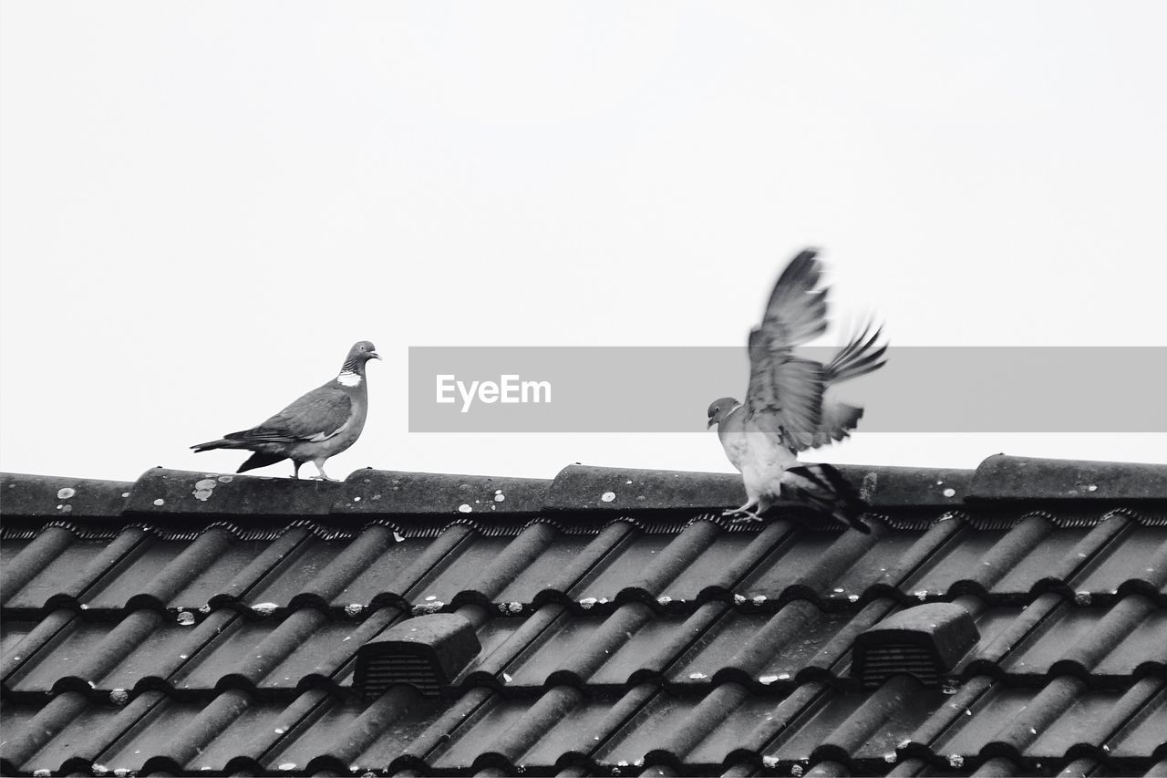 View Of Birds Perching On Roof