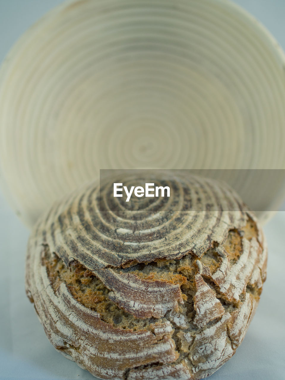 pattern, no people, close-up, focus on foreground, spiral, nature, indoors, day, tree ring, animal themes