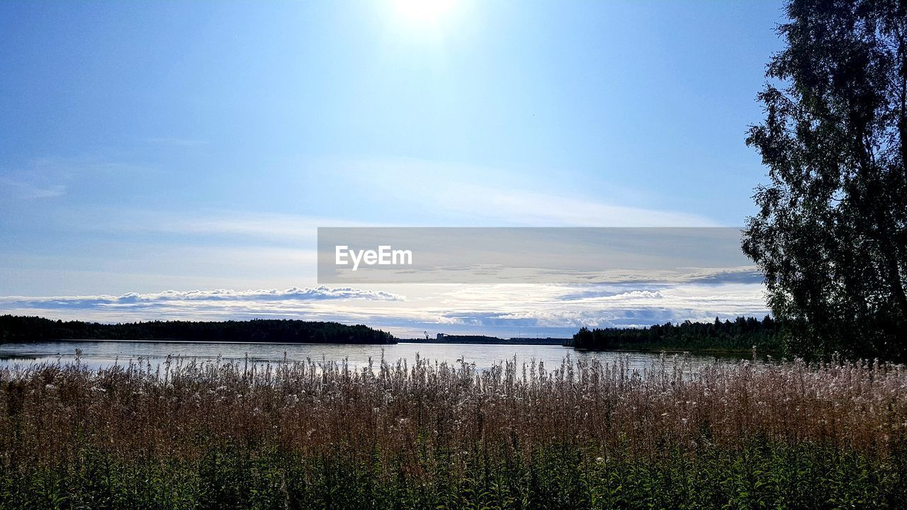 sky, plant, tranquility, tranquil scene, beauty in nature, scenics - nature, water, nature, no people, cloud - sky, sunlight, environment, non-urban scene, lake, landscape, day, growth, grass, sun, outdoors