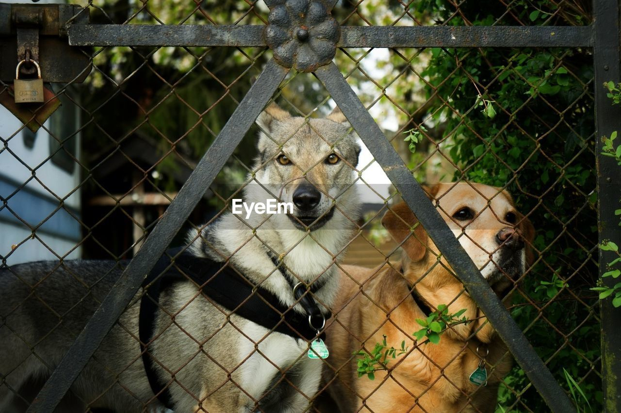 Dogs Standing In Front Of Gate