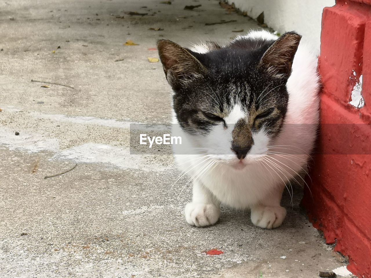 cat, pets, mammal, feline, domestic, one animal, domestic animals, domestic cat, vertebrate, day, no people, whisker, portrait, relaxation, close-up, footpath, looking at camera